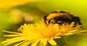 Practica apicultura cu echipament profesionist!