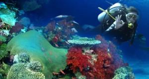 Aquaventure Diving Center – Daca sunteti in cautarea unei experiente senzationale in adancuri!