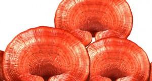 Tratament Naturist: ciuperci medicinale sau cum sa tratezi cancerul!