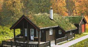 Avantajele acoperisurilor ecologice