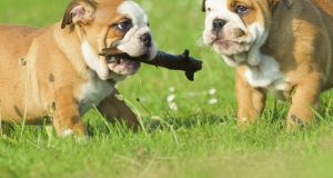 Recompense caini, eficienta in intarirea legaturii affective