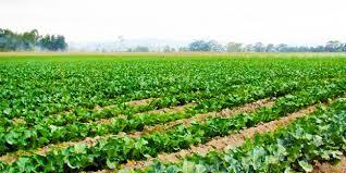 Horticultura si beneficiile acestei ramuri ale agriculturii