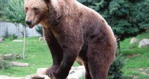 Loc special pentru îngrijirea urșilor la Brașov
