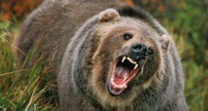 Mamă și fiică ucise de un urs