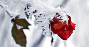 Meteorologii avertizează cod galben de îngheț în toată țara