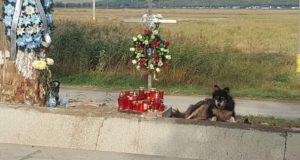 Povestea unui câine care stă de mult timp lângă locul unde a decedat stăpânul lui